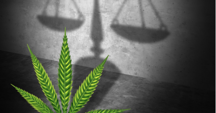 Marijuana and Employment: What You Need to Know